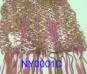 SCARF-NYLON