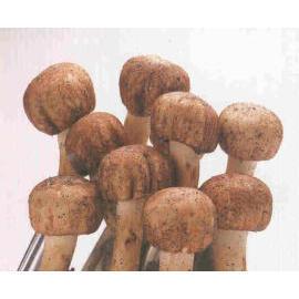 Agaricus blazei murill ( Agaricus Mushroom ) (Шампиньон blazei murill (Agaricus Mushroom))