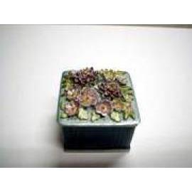 Jewel Box, Square (Jewel Box, площадь)