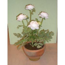 15``H POTTED RANUNCULUS (15``H горшках Ranunculus)