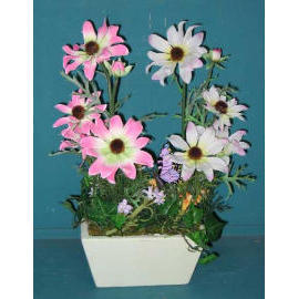 14``H POTTED DAISY (14``H горшках DAISY)