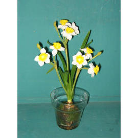 11``H POTTED NARCISSUS (11``H NARCISSUS EMPOTE)