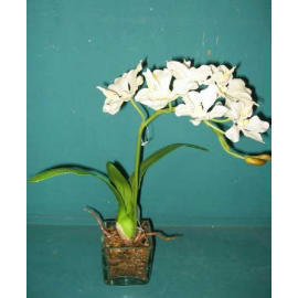 19``H POTTED ORCHID (19``H EMPOTE ORCHID)