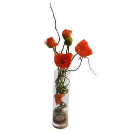 21``H POTTED POPPY (21``H горшках МАКА)