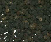 Baikal Skullcap Seed (Baikal Skullcap Seed)