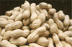 Peanut Inshells 9/11,11/13,13/15 (Арахис Inshells 9 / 11, 11/13, 13/15)