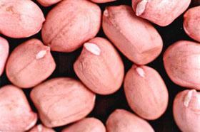 Peanut Inshells, Kernels And Blanched Peanut Kernels (Арахис Inshells, орехов и Бланшированные ядра арахиса)