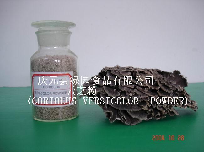 Coriolus Versicolor Powder (Coriolus Versicolor порошковые)