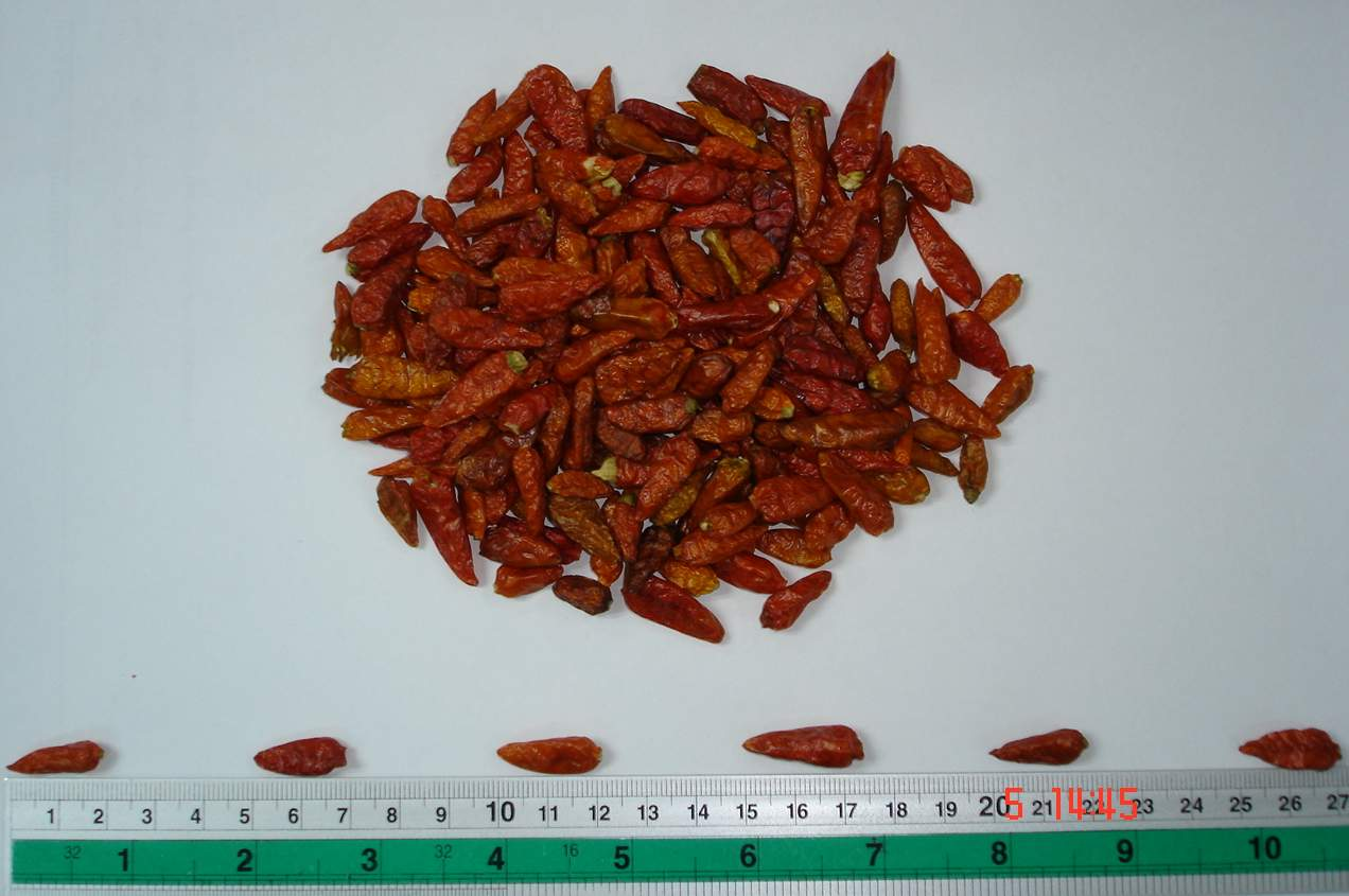 Birds-eye Chilli ( Birds-eye Chilli)