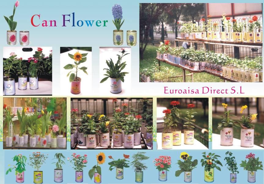 Can Flower (Может цветок)