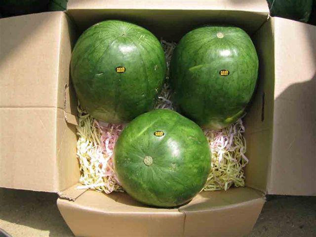 Sweet Watermelon (Сладкие арбузы)