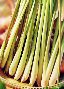 Lemongrass ( Lemongrass)