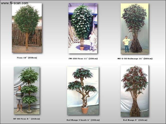 Big Trees, Interior Trees, Design Trees, Ficus (Большие деревья, деревья интерьера, дизайн деревья, Ficus)