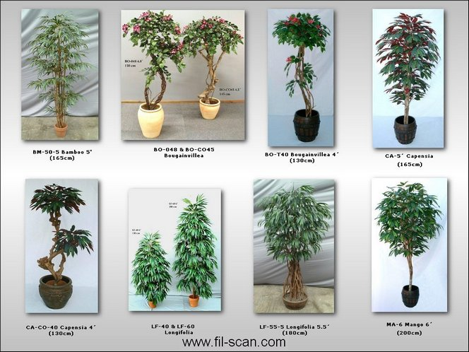 Bamboo, Capensia, Mango, Longifolia, Bougainvillea Tree (Бамбук, Capensia, манго, Longifolia, Бугенвиль дерево)