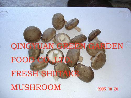 Fresh Shiitake Mushroom (Свежих грибов шиитаке)