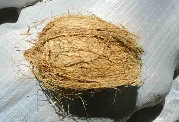 Coconuts From Sri Lanka ( Coconuts From Sri Lanka)