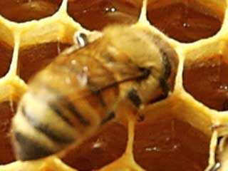 Honey Beeswax, Candle Wax, Natural Beeswax, Beeswax