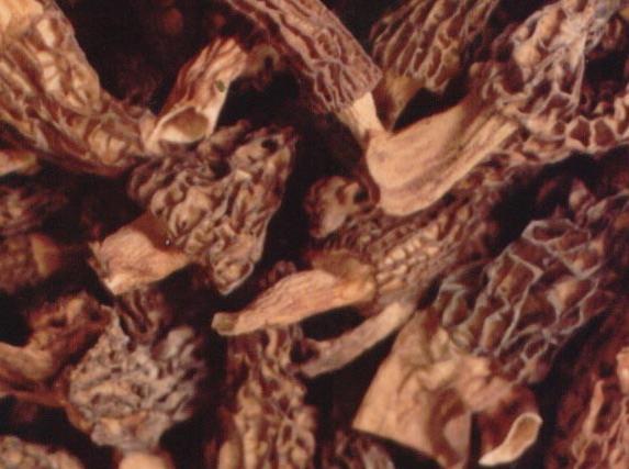 Frozen And Dried Morel (Замороженные и сушеные Морель)