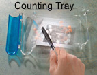 Medical Counting Tray