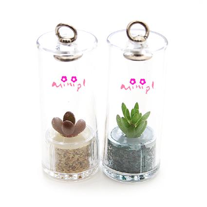 A Living Miniature Plant In Plastic Capsule