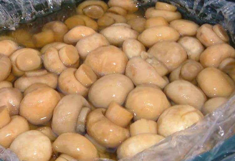 Champignon Mushroom (Шампиньоны Грибы)