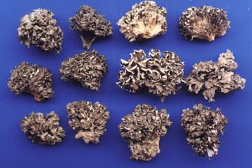 Dried Maitake Mushrooms (Сушеные грибы Maitake)