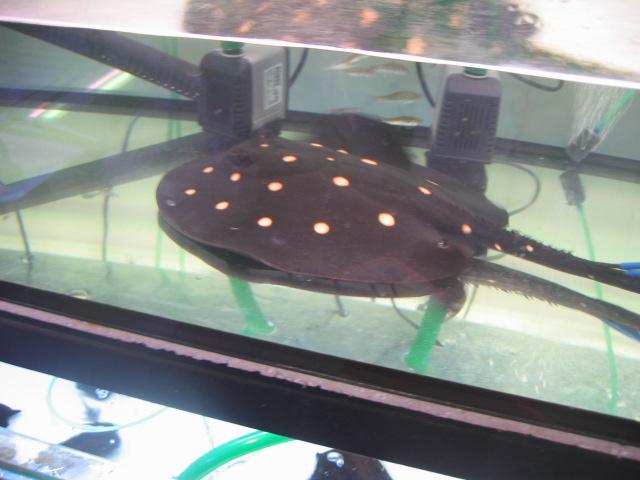 Tropicals Wild And Rare Fishes (Tropicals диких и редких рыб)