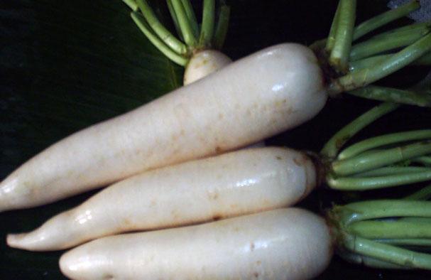 Turnip (Репа)