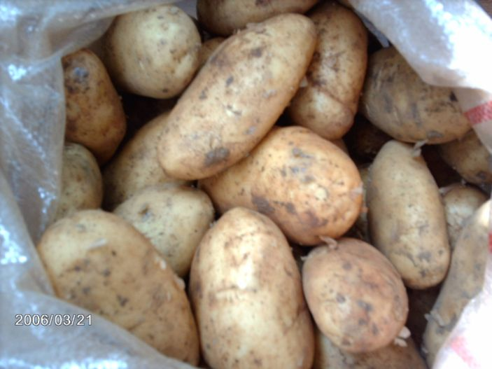 Early Potatoes (Pommes de terre primeurs)