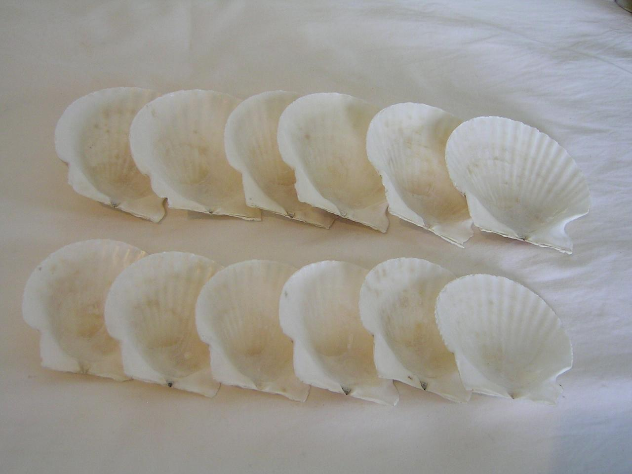 Shaped Scallop Shell (En forme de Coquille Saint-Jacques)