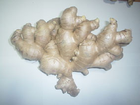 Giant Ginger And Red Ginger (Giant Red Ginger et Ginger)