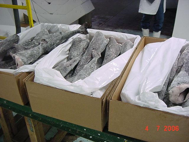 Black Cod (Sablefish) (Черная треска (угольная рыба))