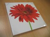 Inkjet Giclee Digital Printing Canvas (Жикле струйной цифровой печати Холст)