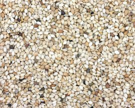 Indian Natural White Sesame Seeds ( Indian Natural White Sesame Seeds)