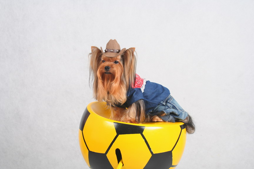 Dog`s Clothing (Собака одежда)