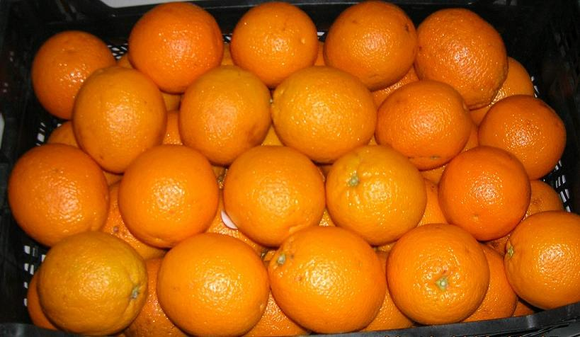 Orange From Turkey