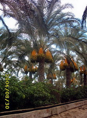 Palm Trees And Ornamental Plants (Пальмовых деревьев и декоративных растений)