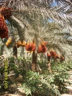 Palms (Palms)