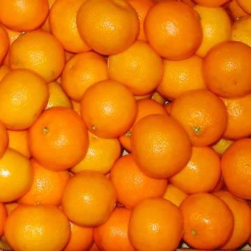 Fresh Mandarins (Mandarines, fraîches)