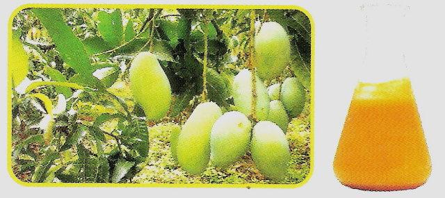 Mango Single Puree (Одноместные Сок манго)