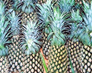 Fresh Pineapples From Sri Lanka (Свежих ананасов из Шри-Ланки)