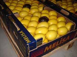 Lemon (Лимон)