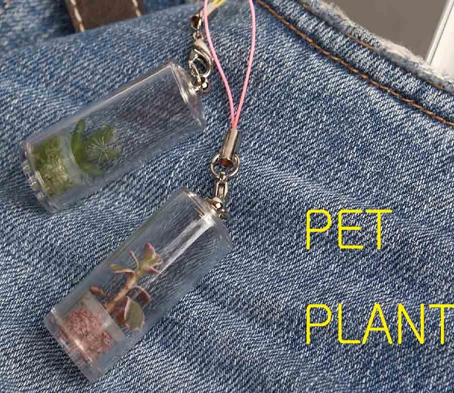 Pet Plant (Pet завода)