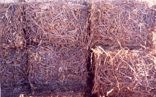 Azerbaijan Origin Licorice Roots (Azerbaïdjan Origine Licorice Roots)