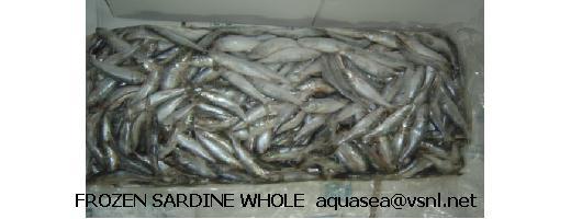 Frozen Sardine (Замороженная Сардина)