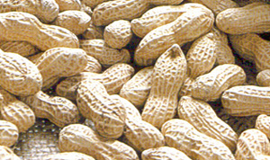 Peanuts In Shell (Les arachides en coque)