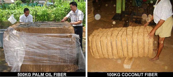 Palm Fiber (Palm Fiber)