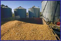 Corn Flowed Products. (Кукуруза текла продукты.)
