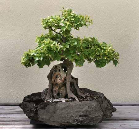 Bonsai Planter (Бонсай Planter)