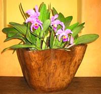 Teak Wood Bowls And Planters (Teak Wood чаши и плантаторы)